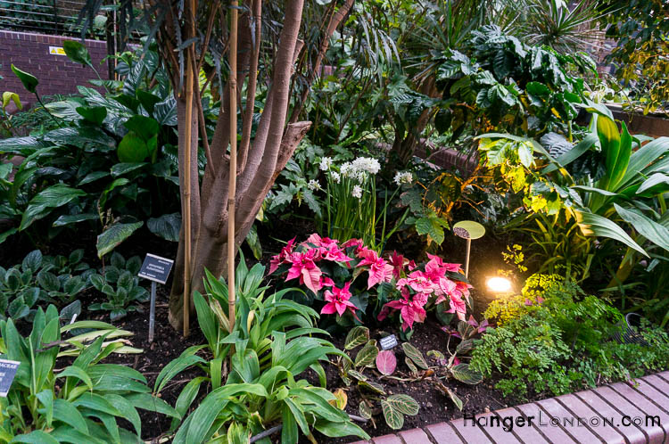plants conservatory