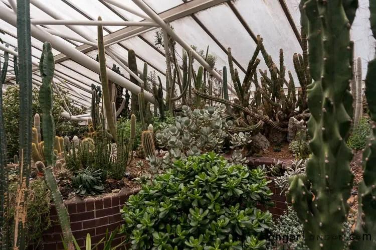 The Barbican Conservatory: London's brutalist hidden garden 1