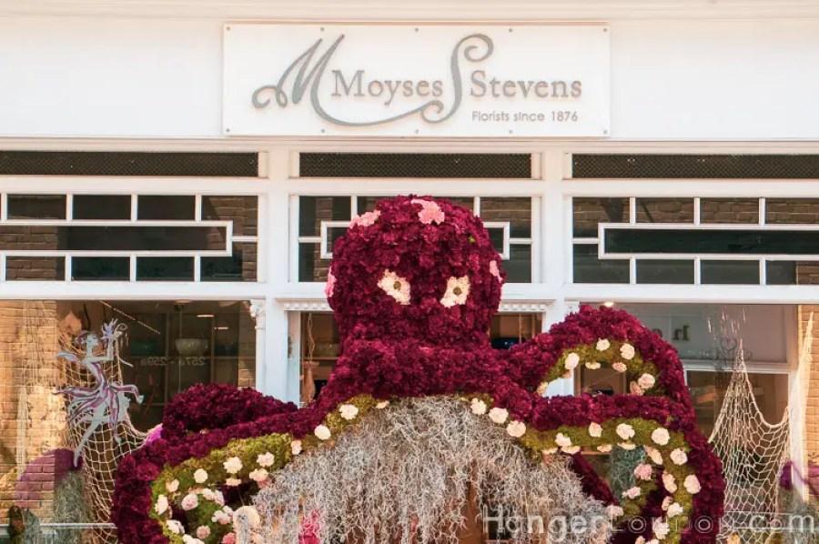 Chelsea in Bloom Moyses Stevens