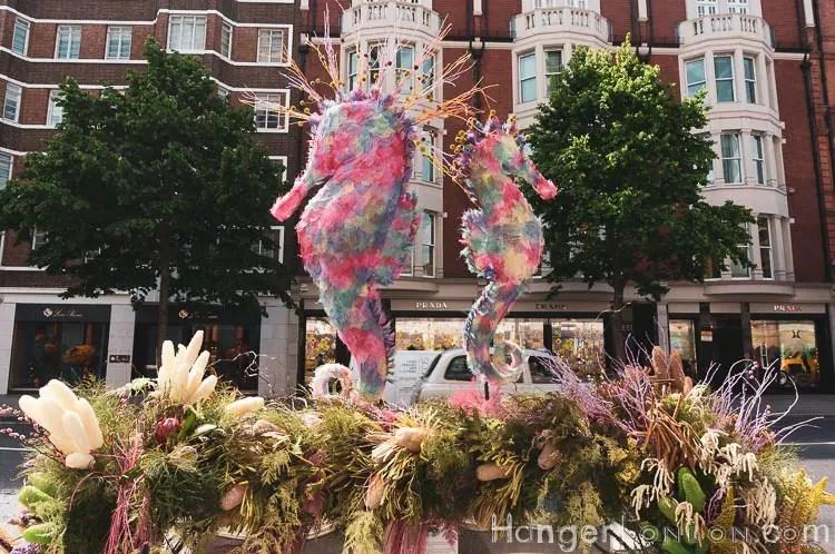 Sea Horse Chelsea in Bloom