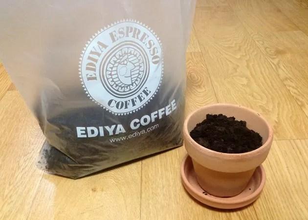 cafe_ediya_coffee_005 コーヒーカス 植木鉢