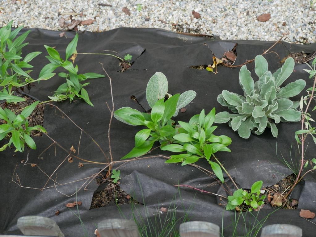 Die Pflanzen im Gratis-Beet gedeihen gut