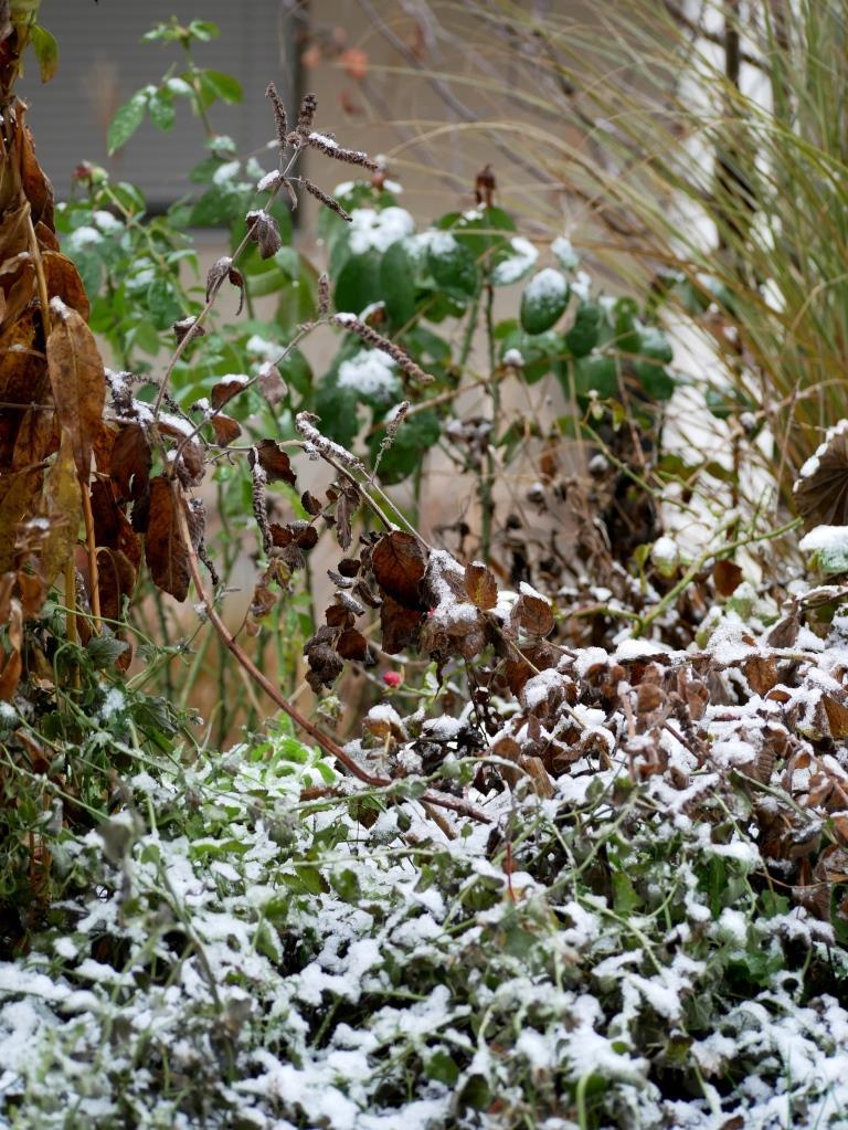 Schnee im winterlichen Garten im Dezember