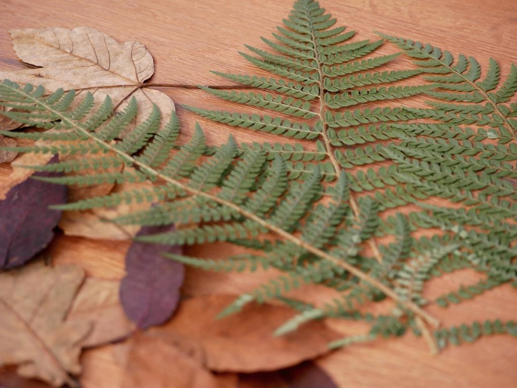 Die filigranen Farnblätter kommen in unserem Pflanzenbild später besonders gut zur Geltung