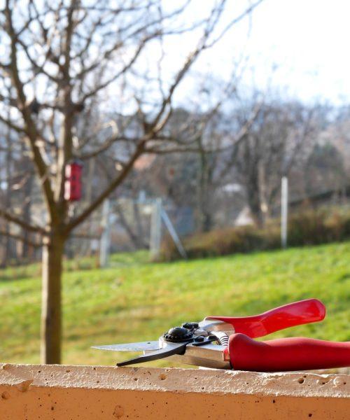 Apfelbaum schneiden für Anfänger
