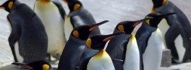 Picture of penguins on ice shelf