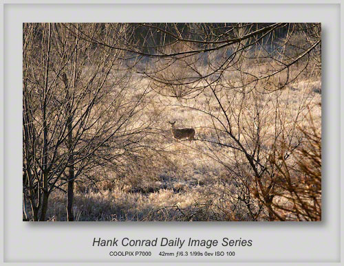 2/14/2013 Frosty Morning Whitetail Deer