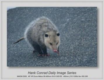 2/28/2013 Possum