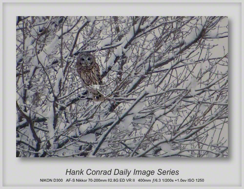 3/06/2013 Barred Owl