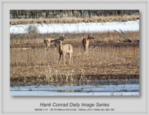 3/17/2013 More White-tailed Deer Wishing for Spring