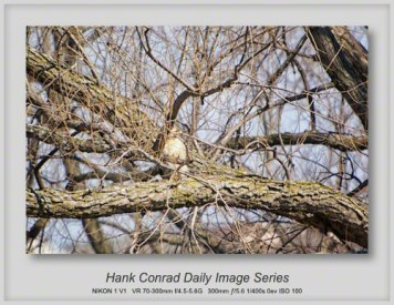 3/21/2013 Red-tailed Hawk