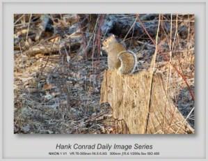 3/24/2013 Busy Squirrel