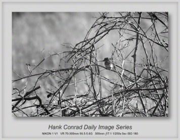 3/29/2013 Bird in a Thicket