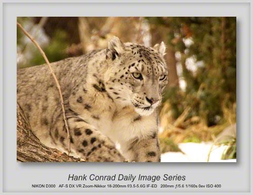 4/01/2013 Snow Leopard