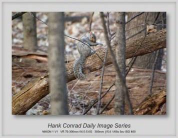 4/08/2013 Grey Squirrel