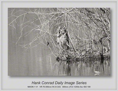 4/22/2013 Ghostly Wildlife