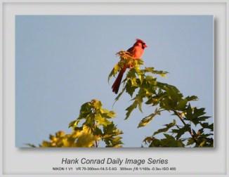 7/12/2013 Cardinal Sunset