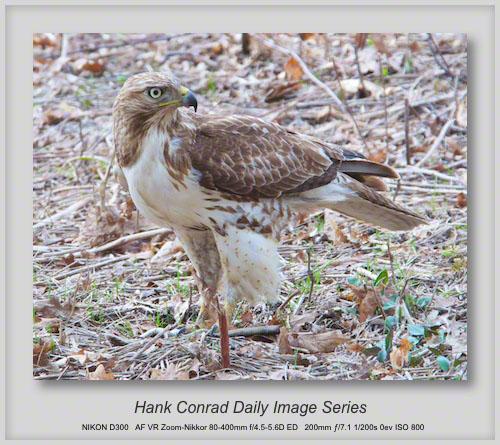 8/12/2013 Hawk vs. Snake
