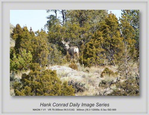 10/19/2013 Mule Deer Buck