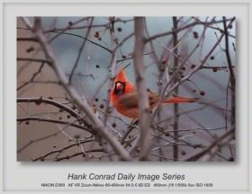 12/29/2013 Cardinal
