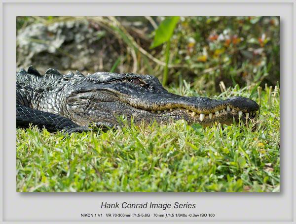 1/14/2014 Gator: Eye to Eye