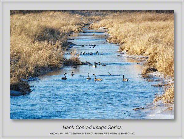 Stream Narrows