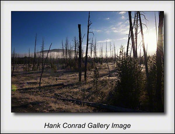 Yellowstone Morning
