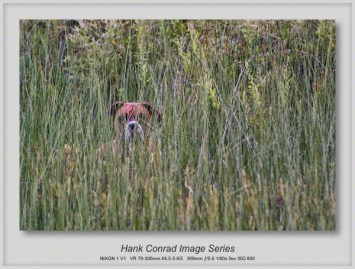 Dog in the Weeds