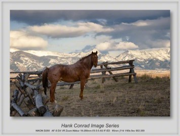 High Country Horse