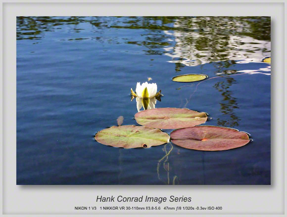 White Lily Pad