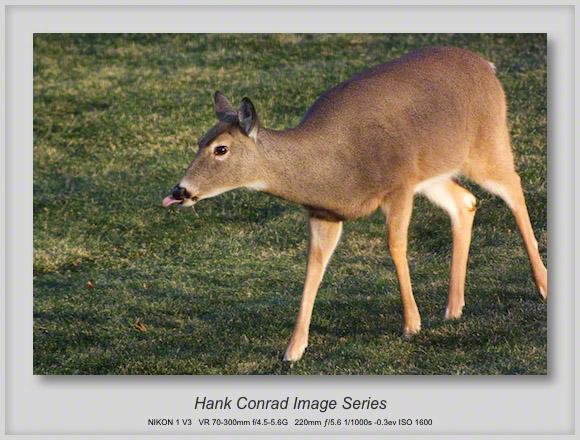 Deer are Back!