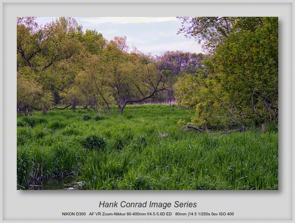 Walkabout Grass