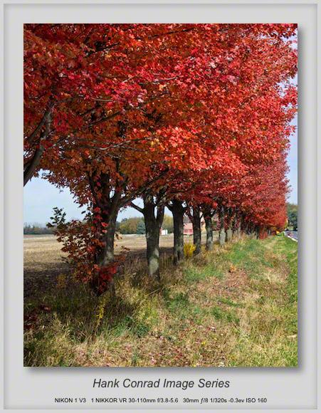 Road Tree Color