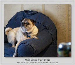 7 Image Story | Finally, my own Pug Chair!