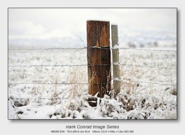 Snow Makes the Image | Fence Gate