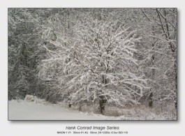 Snow Makes the Image | Quiet Brilliance