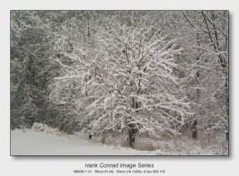 Snow Makes the Image | Quiet Brilliance