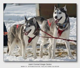 Husky Dogsled Party   We're Ready; Let's Go