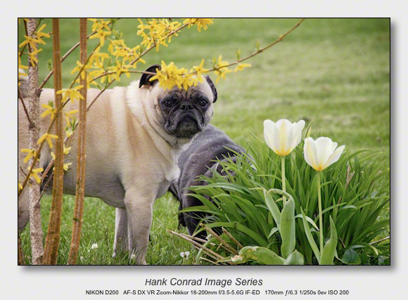Spring Walkabout | Early Spring Pugs