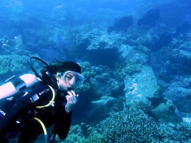 113 - Tenggol Coral Beach Resort 月影湾の度假村