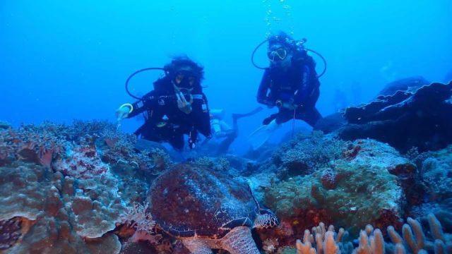 22 - Tenggol Coral Beach Resort 月影湾の度假村