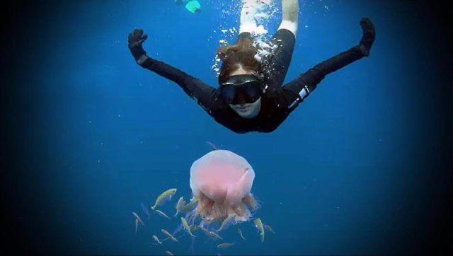 tttt 1024x579 - Tenggol Coral Beach Resort 月影湾の度假村