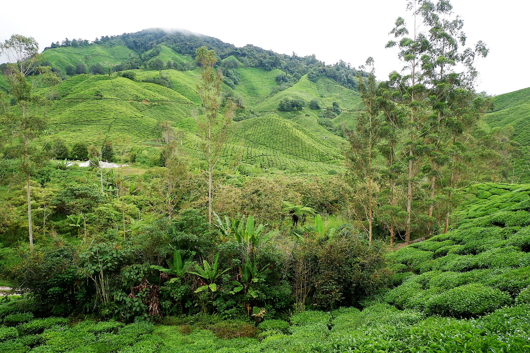 IMG 5236 - A Getaway in Cameron Highlands that will gives you more than you deserve!
