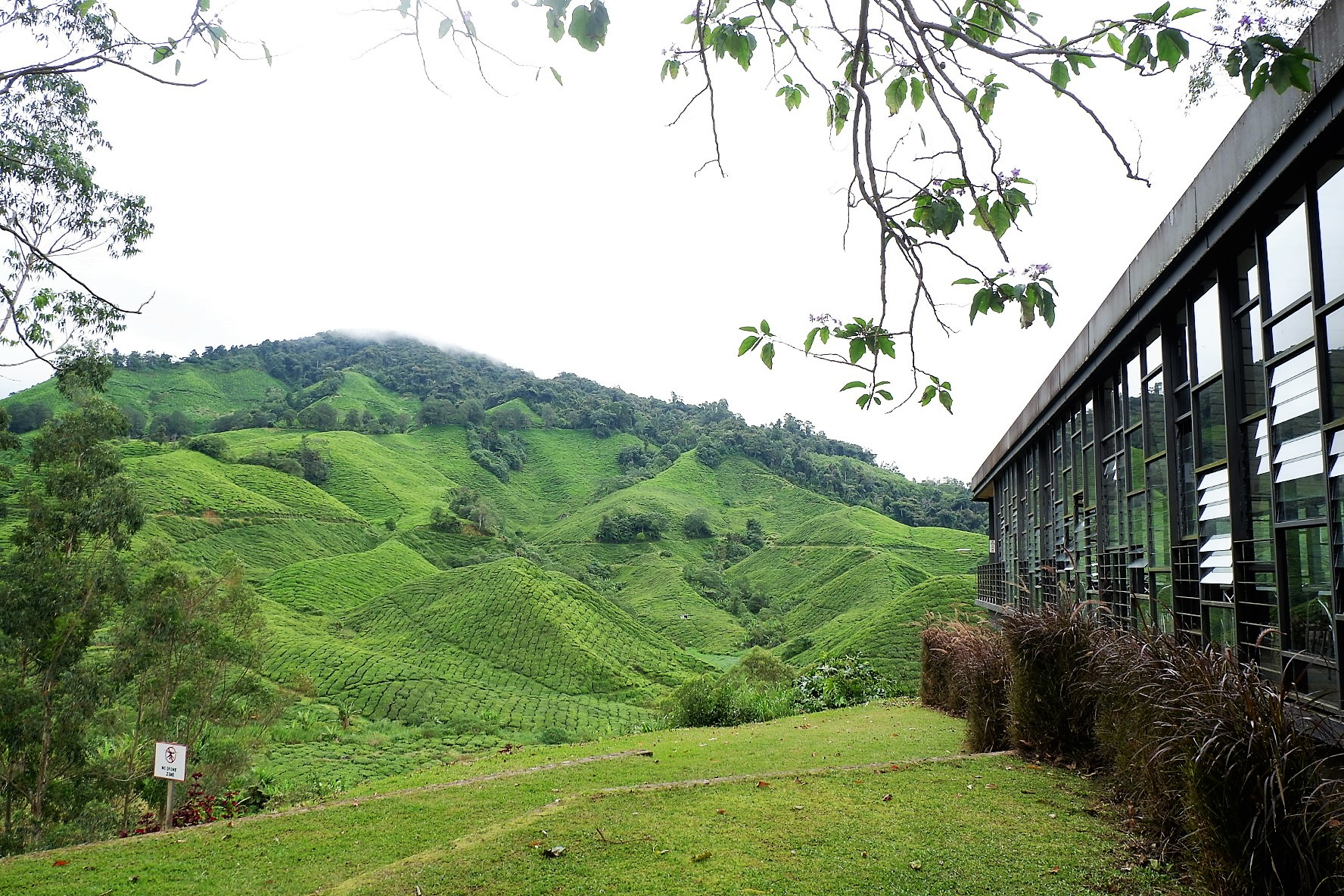 IMG 5239 - A Getaway in Cameron Highlands that will gives you more than you deserve!