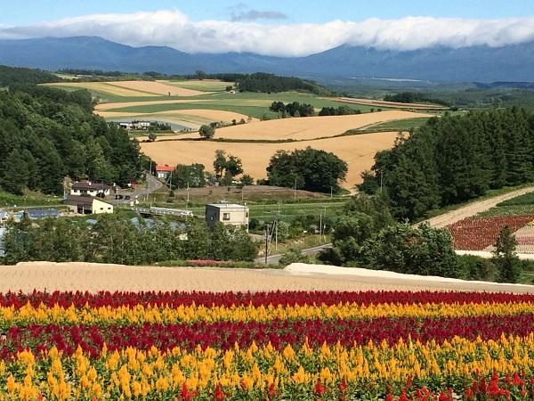 2014年7月、北海道・美瑛の風景