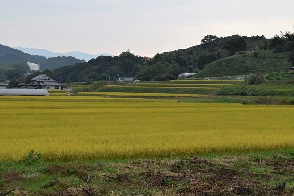 2015年秋の奈良・明日香村の田園風景
