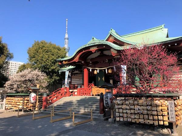 ★亀戸天神社の本殿に梅とスカイツリー
