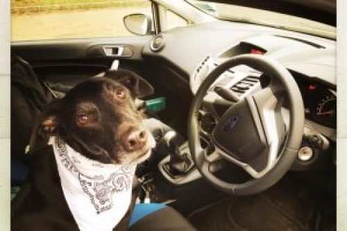Mom, can I drive - Tips for Road-Tripping with a Dog