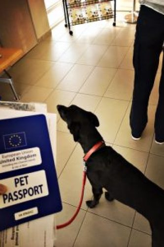 Dog passport - Tips for Road-tripping with a dog