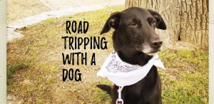 Tips for Road-tripping with a dog - header